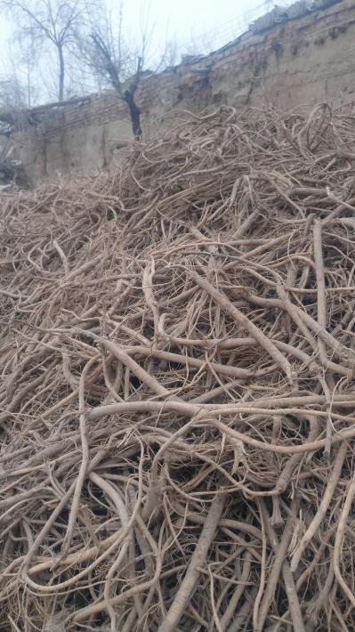 甘肃原产地旱地黄芪西北特产天然无硫药用价值保障
