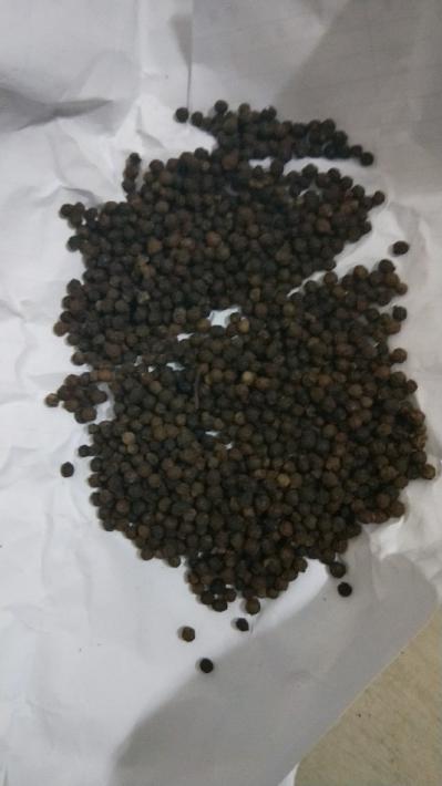 黑胡椒库存10吨