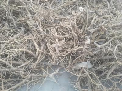 黄芩出售19元每公斤
