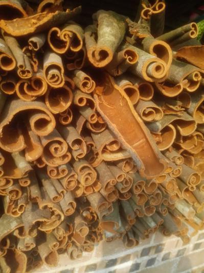 中国特产肉桂皮