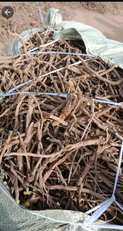 内蒙4年黄芩,包含量