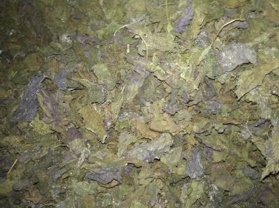 优质20吨紫苏干叶有待出售