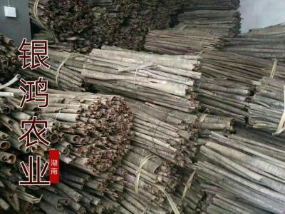 银鸿农业供应厚朴根皮厚朴花货干无霉变