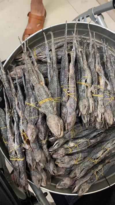 老挝野生蛤蚧