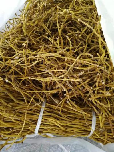 赤水金钗石斛干条,老条烘烤,石斛碱含量超高,生长于赤水自然山石上,软黄金、千年润