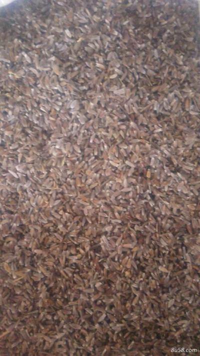 河北省承德市围场县纯朱砂点苍术种子,可直接种植也可培苗