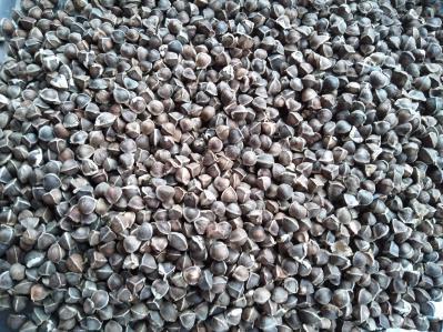 印度特级辣木籽