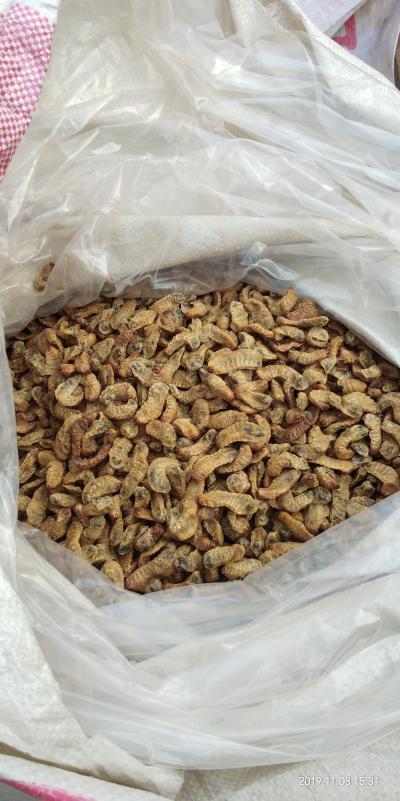 11月刚出品的蛴螬干品,色泽金黄气味芳香,干燥无杂质优价廉!