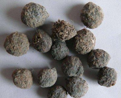 中药材望月砂哪里有卖 望月砂供应