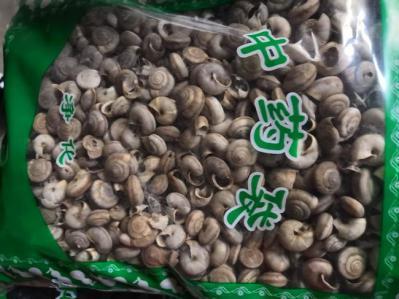 中药材蜗牛哪里能买到 蜗牛供应