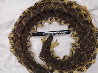 动物类中药材蕲蛇批发 产地销售蕲蛇 中药材大全