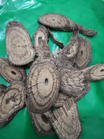 冷背药材买麻藤去哪买 一公斤买麻藤什么价格 买麻藤的功效与作用