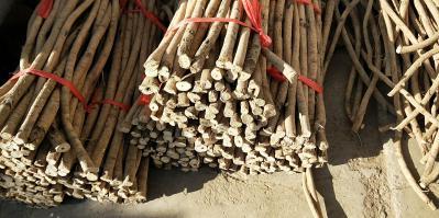 甘肃黄芪条精选优质黄芪节子甘肃原产地一手货源