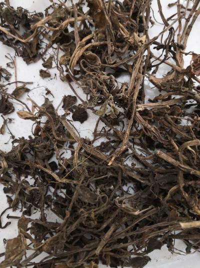 石婵草到哪里买多少钱一斤 中药饮片石婵草供货商