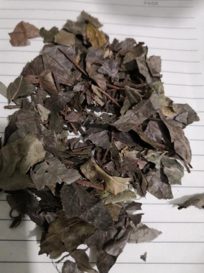 冷背药材平地木一公斤多少钱 哪里能买到平地木
