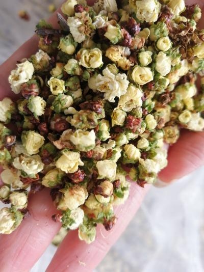 黄山优质绿梅供应(花农自产自销,物美价廉,2020年新货)