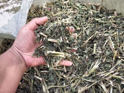 基地自产紫锥菊(松果菊)药材