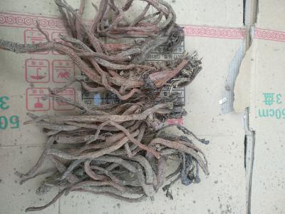 本人种植丹参15亩,大概8000公斤