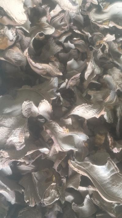 常年供应金毛狗脊统片