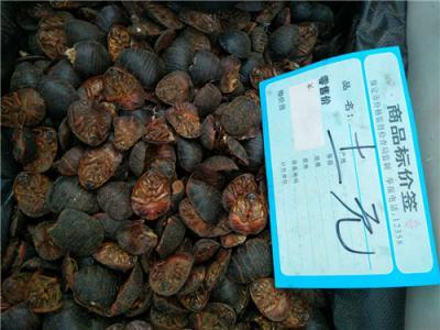 土元哪里能买到多少钱一斤到哪里买土元