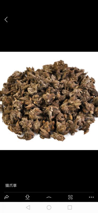 本人长年出售猫爪草,价格面议,都是本地农户种植的,希望能给他们买一个好的价格