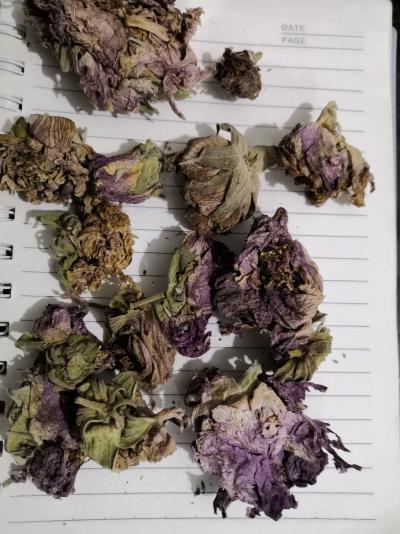 芙蓉花一公斤多少钱安国中药材批发各种冷背药材