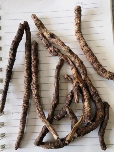奇花异草中药材哪里卖啊 胡黄连一斤多少钱