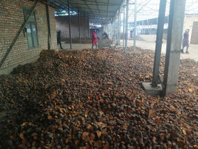 唐古特大黄种植基地。一手货源。寻求长期合作药厂。