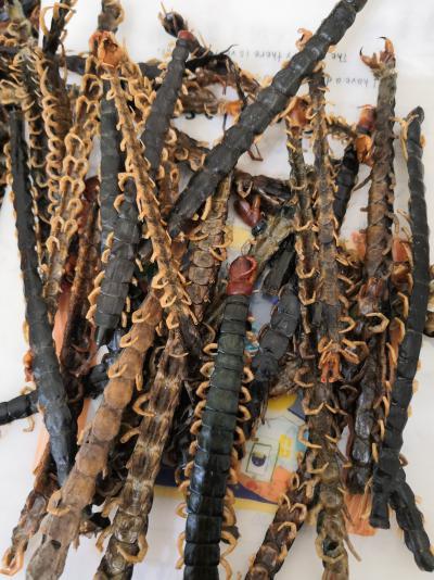 蜈蚣哪里有卖的 药用蜈蚣一斤多少钱
