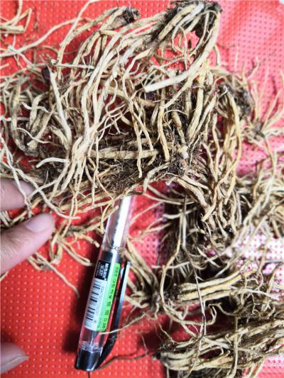 龙胆草产地价格龙胆草批发零售龙胆草供应