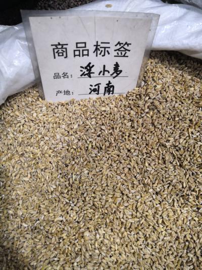 供应浮小麦哪里能买到浮小麦多少钱一斤