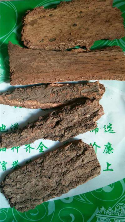 樟树皮供应樟树皮的价格樟树皮批发零售