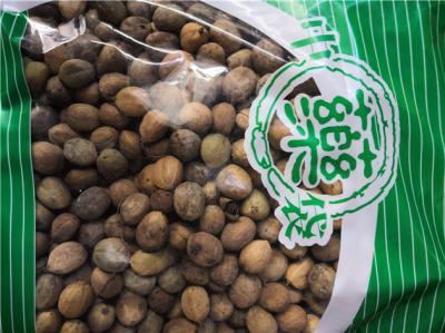 供应巴豆巴豆多少钱一斤到哪里买巴豆