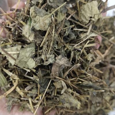 中药材肺形草价格批发 肺形草哪里有卖的多少钱一斤