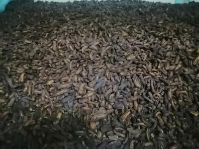 湖北皱皮木瓜