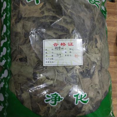 枸骨叶多少钱一斤产地价格