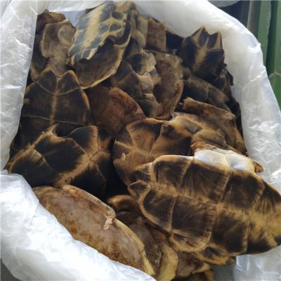 龟板批发商价格多少哪里能买到