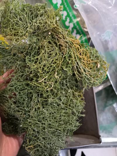 海粉产地批发价格优惠