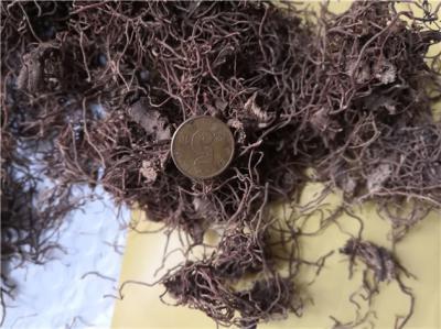 红毛七哪里能买到多少钱一斤