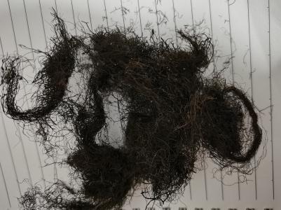 头发七一斤多少钱,哪里能购买到头发七
