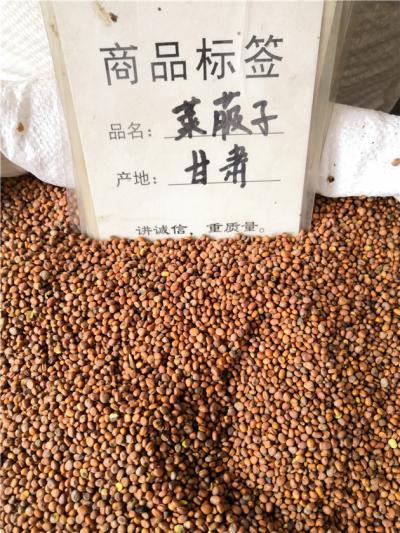 莱菔子鸽粮专用基础粮食