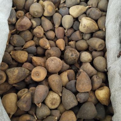 冷背中药材批发木馒头价格多少
