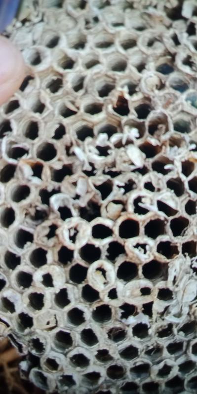 大量出售蜂房,蚂蜂窝
