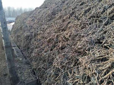 出售内蒙古特产:粗壮干板蓝根8万斤、优质大青叶1.5万斤