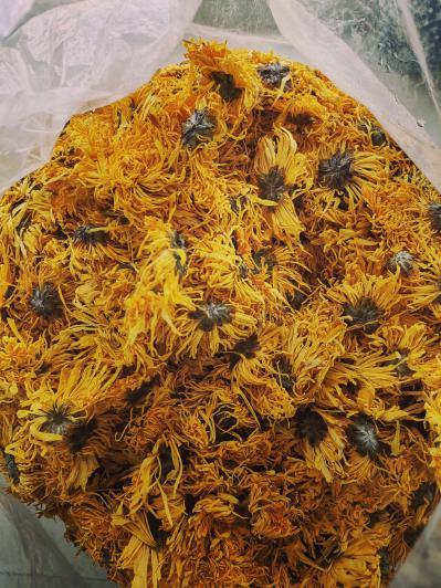 黄金菊代售