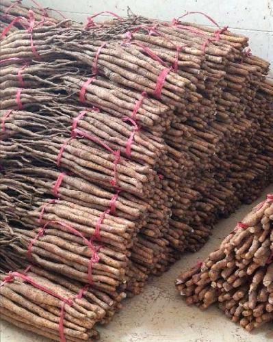 温县垆土铁棍山药,产地直销,量大从优