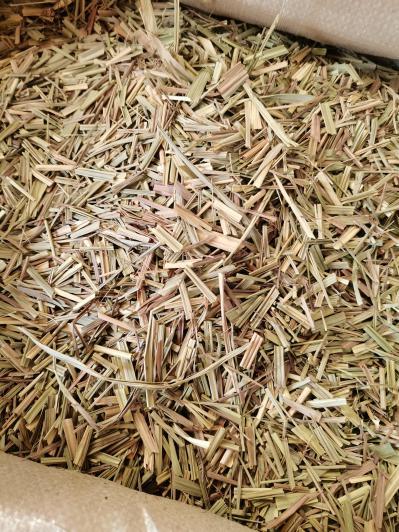 香茅草是什么药材 香茅草的价格 图片 行情
