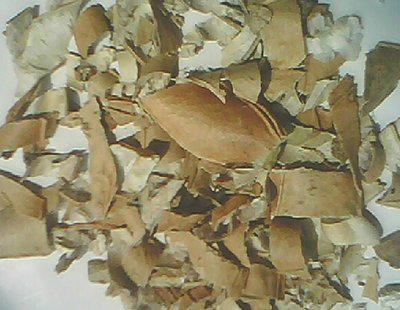 批发冷背药材刀豆壳 刀豆一斤多少钱  哪里出售刀豆壳价格多少
