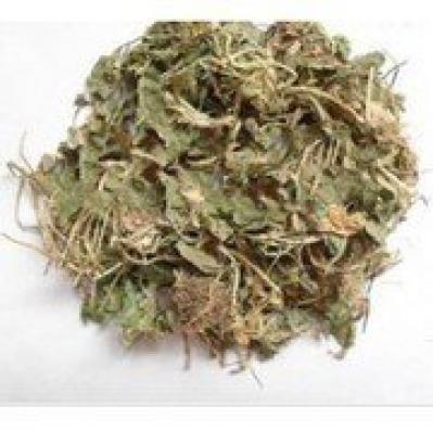 冷背中草原材料点地梅 喉咙草 白花珍珠草 天星草