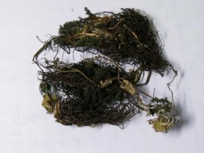 福寿草哪里有卖的 冷背药材福寿草一斤多少钱啊